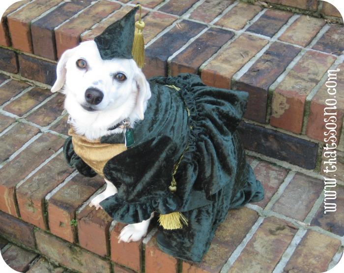Lil Sno Favorite Costume Scarlett Sno-Haira