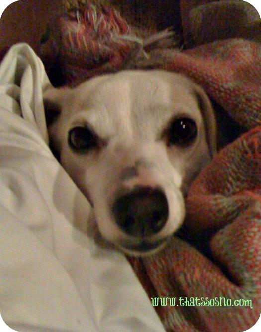 Lil Sno blanket snuggle.